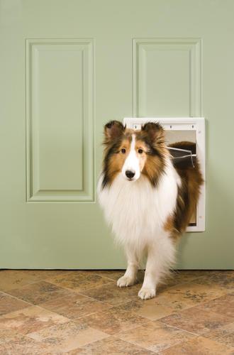 petsafe x medium pet door replacement flap at